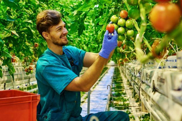 РСХБ проанализировал предложения о стажировках, размещенные предприятиями агросектора, на летний период.
