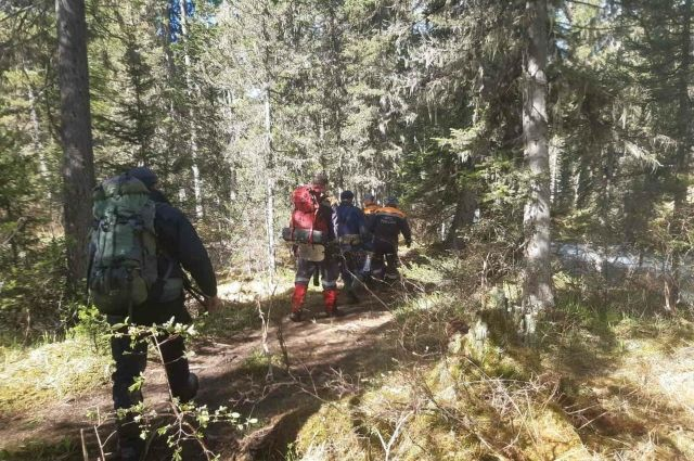 Спасатели несли раненного медведицей туриста 8 км.