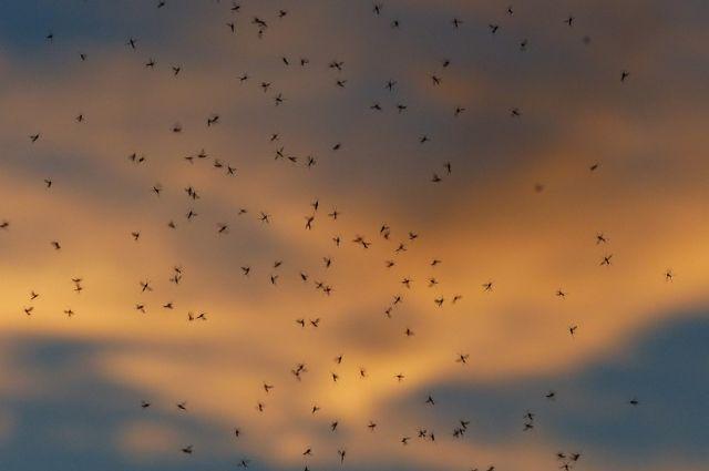 В Липецкой области примут меры профилактики болезней, разносимых комарами