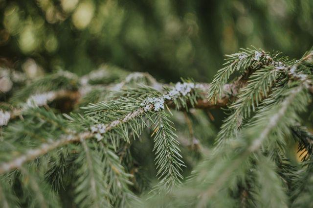 Были высажены 22 дерева