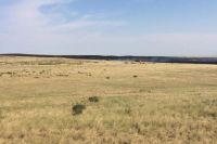Сухая трава загорелась неподалеку от поселка Комарово.