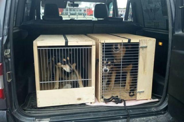 Жалобы жителей на бродячих собак принимают по телефону 005