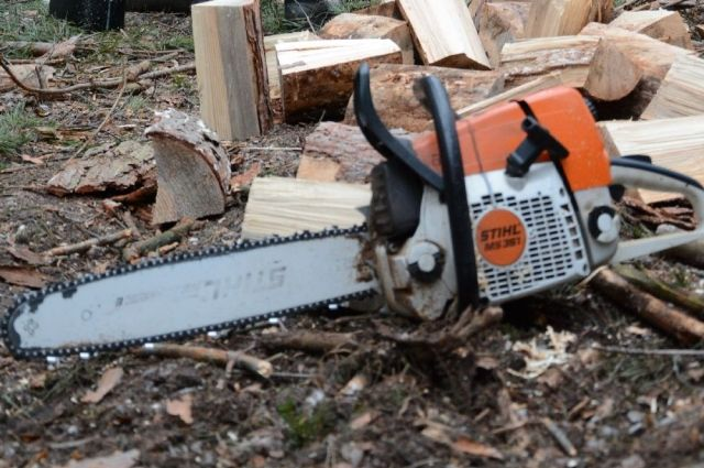 Чернореченское лесничество лишилось 16 стволов деревьев.