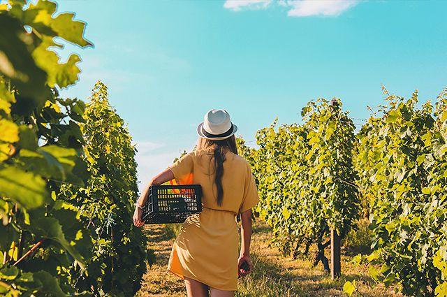 Летом открывается много вакансий в сельском хозяйстве. Причём не только в области, но и в других регионах.