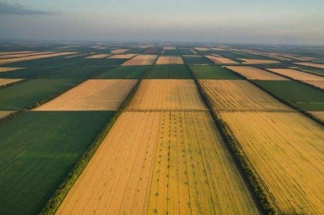 В Украине заработал рынок земли: что изменится