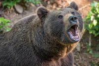 Полицейский застрелил медведя из охотничьего ружья.