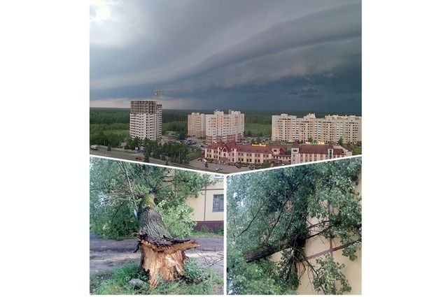 Изнывающим от зноя людям дождь принёс не облегчение, а разрушения. К примеру, упавшее от ветра дерево насквозь пробило стену панельного дома в Бежице.