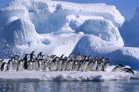 В Антарктиде зафиксирована аномальная жара, - ООН