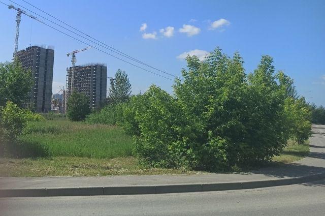 Природный лесной массив возле микрорайона Преображенский.