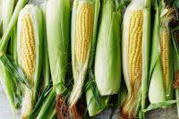 Кукуруза: польза и вред для организма.