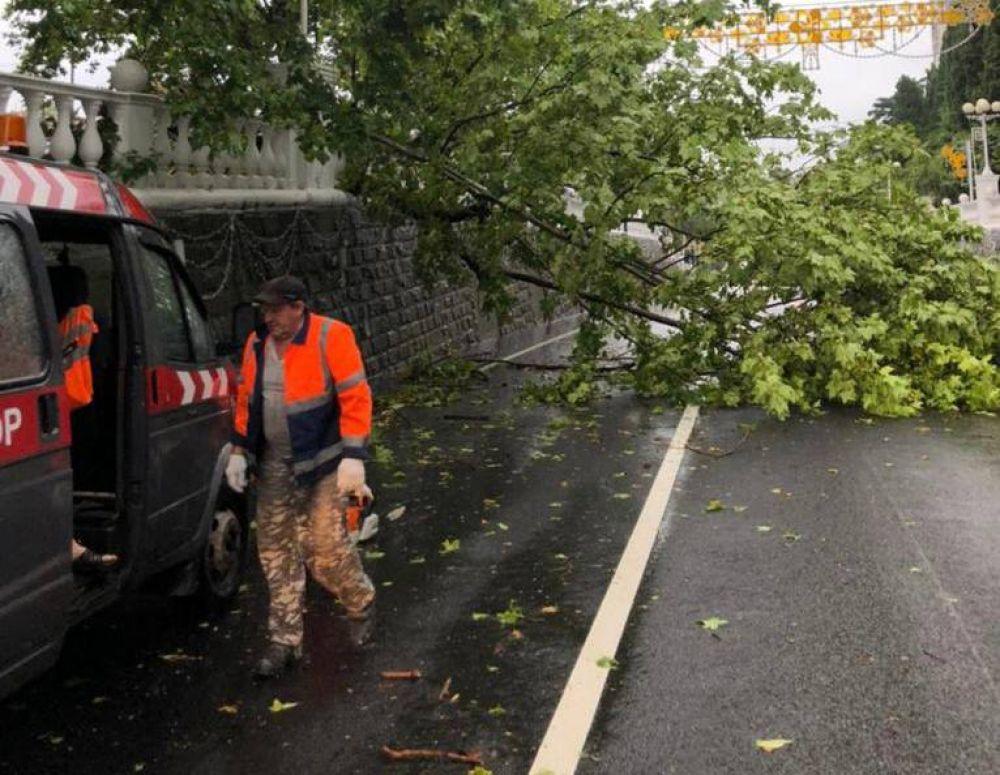 Городские службы убирают с тротуаров поваленные ветром деревья.