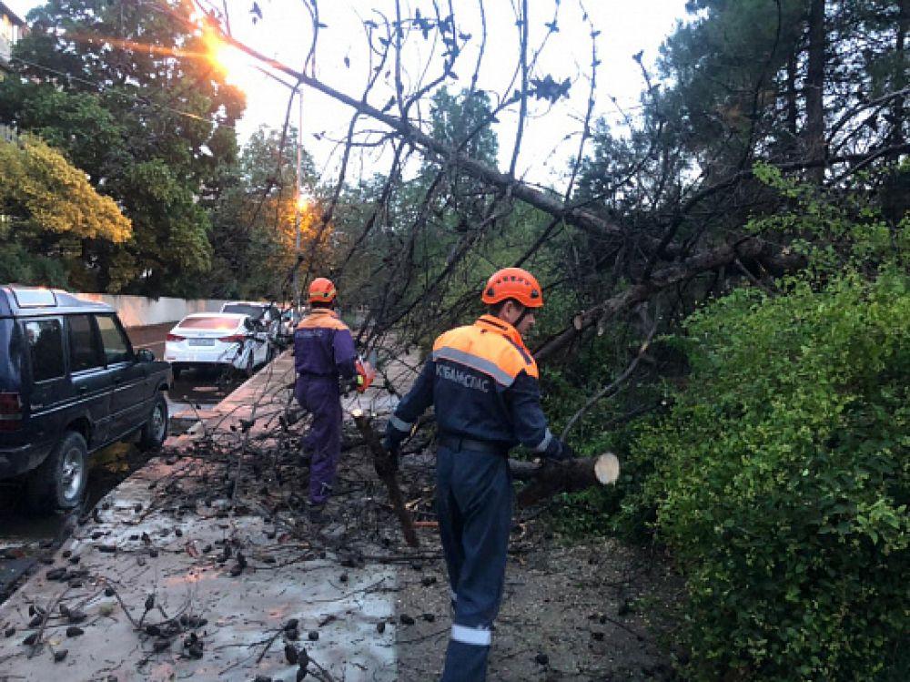 Штормовой ветер ломает деревья, один человек погиб.
