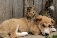 Ученые установили, как часто животные заражаются от хозяев COVID-19
