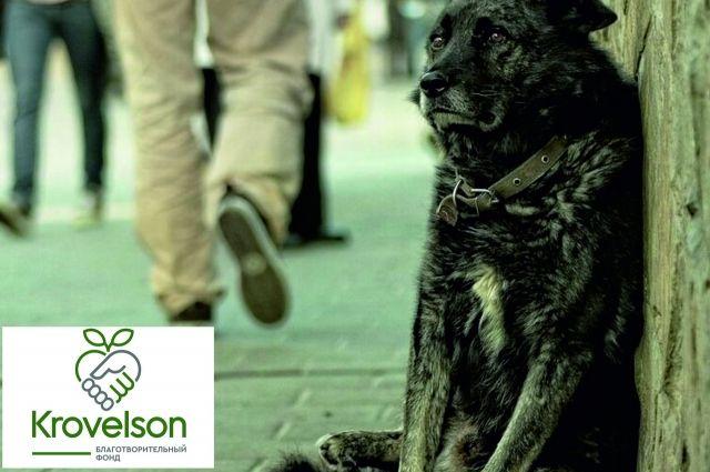 Благотворительный фонд в Оренбурге предлагает новую программу решения проблемы бездомных животных.