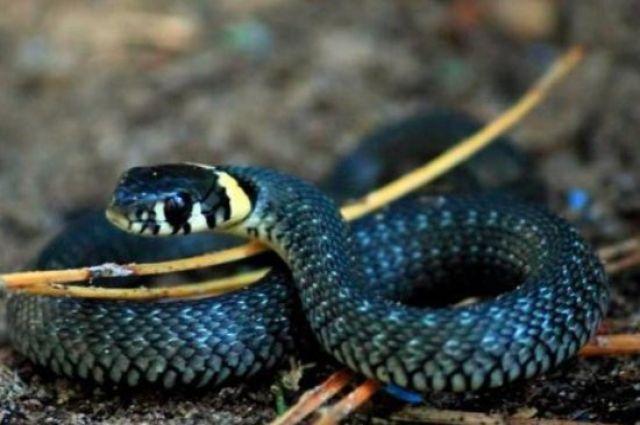 Из-за укуса змеи 9-летний мальчик лежит в реанимации