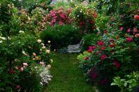 Галина Баскакова превратила приусадебный участок в розарий, где представлены около 260 сортов цветов.