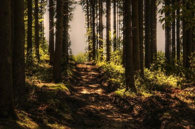 Мужчину запихали в багажник, вывезли в лес и забили до смерти.