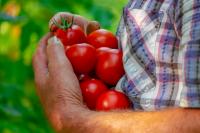 В Оренбуржье прогнозируют снижение цен на овощи урожая 2021 года.