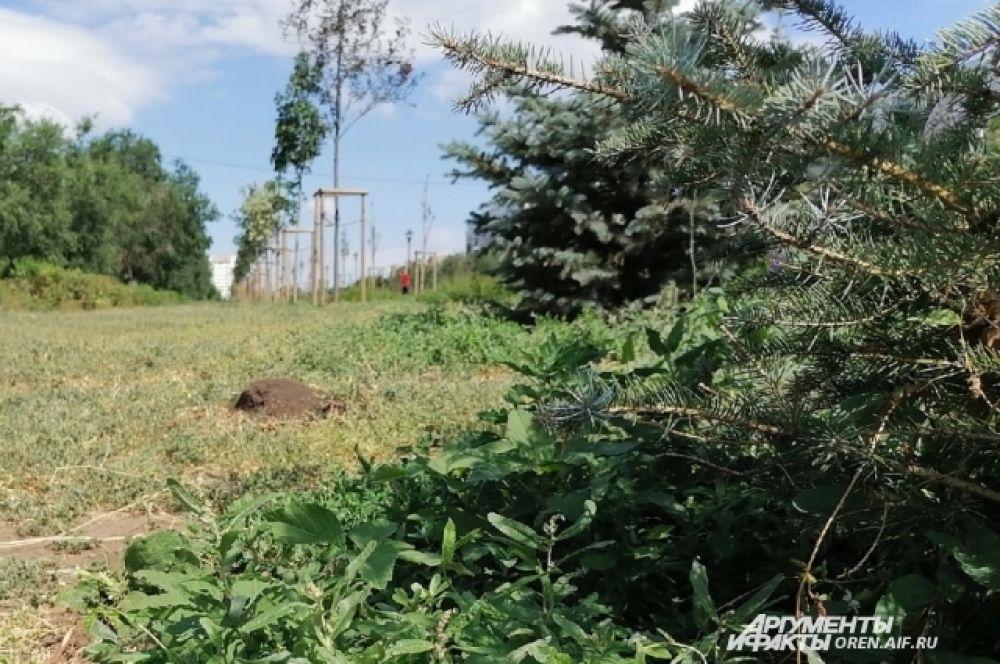 Не дождался благоустройства сквер Лебедева и Сираева, где 17 тыс. кв. метров должны были засеять газоном.