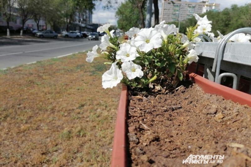 Улицу Чкалова украсили редкие и наполовину засаженные вазоны.