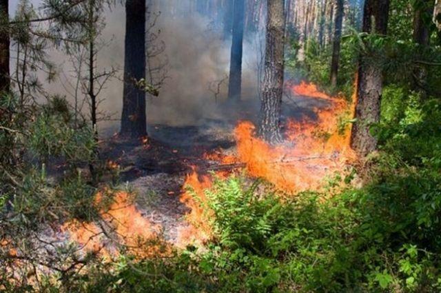 Синоптики предупреждают о чрезвычайной пожарной опасности в Украине.