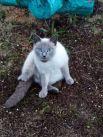 Кошка Эля. Участник №3