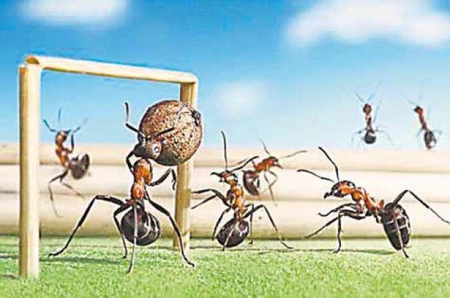 Фотограф Андрей Павлов посвятил муравьям целый фотопроект. Моделей он помещает в различные интерьеры. Они у него играют в футбол и катаются на телеге