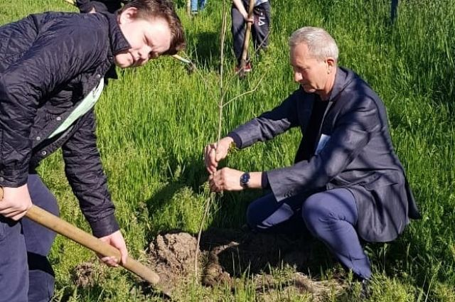 Активисты каждую осень сажают деревья.