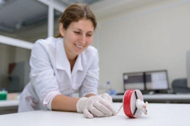 Опыты проводились на клеточных культурах и на мышах.