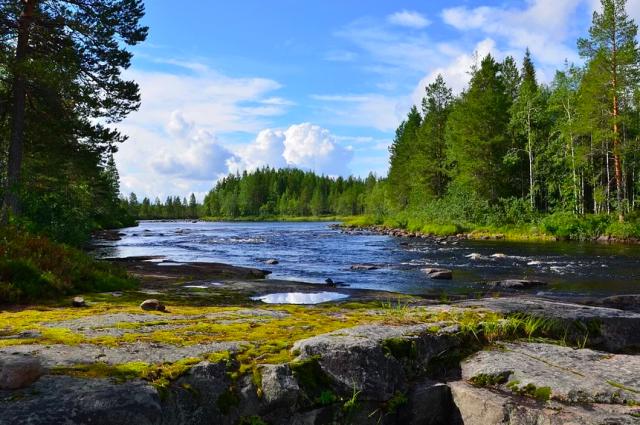 Красноярский край – второй по площади субъект России, где есть все климатические зоны и большое  количество лесов.
