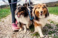 Верховная Рада усилила меры против жестокого обращения с животными
