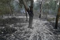 В Сорочинском городском округе из-за непотушенного окурка сгорели 15 гектаров леса.