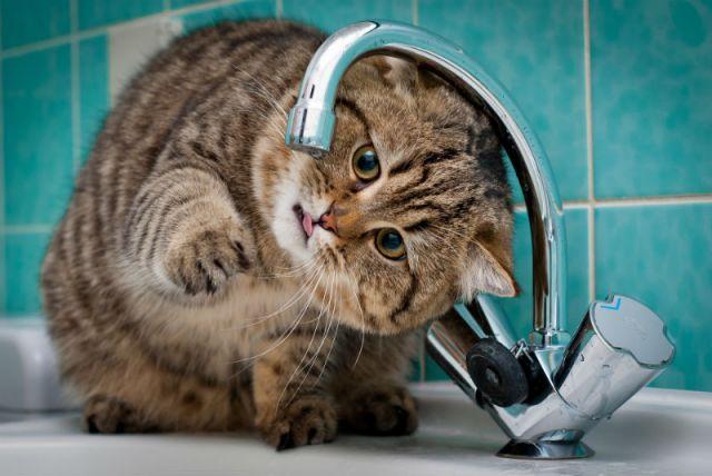 Губернатор поручил сделать перерасчёт за воду для жителей Пскова