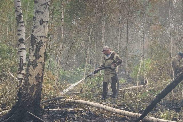 Огонь прошёл 190 га: лесной пожар под Краснокамском ликвидирован