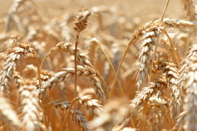 Всего из-за погодных условий пострадали посевы в 30 муниципальных образованиях области.