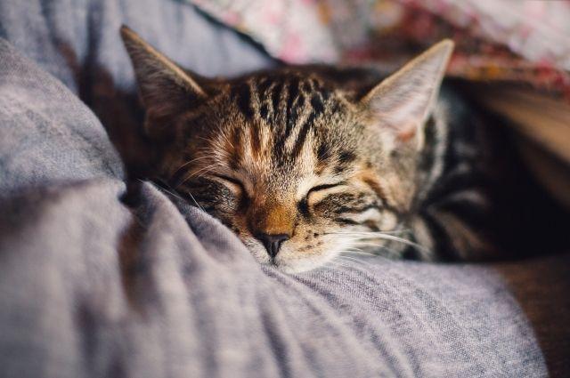 В Новотроицке мужчина сломал кошке таз на глазах у детей.