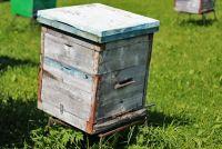 Пчеловоды остались без мёда и средств к существованию.