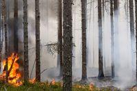 В большинстве случаев причиной возникновения лесных пожаров были грозовые разряды