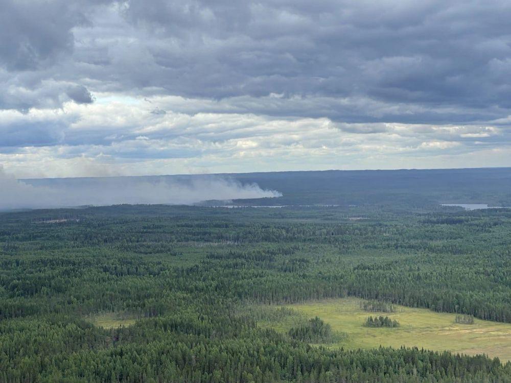 Лесные пожары в Карелии