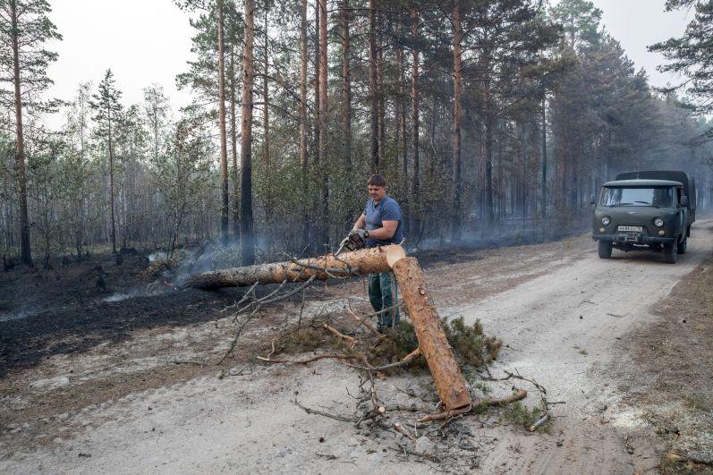 Сотрудник лесной охраны расчищает дорогу между деревнями от упавшего горелого дерева рядом с Сямозером в Пряжинском районе Карелии