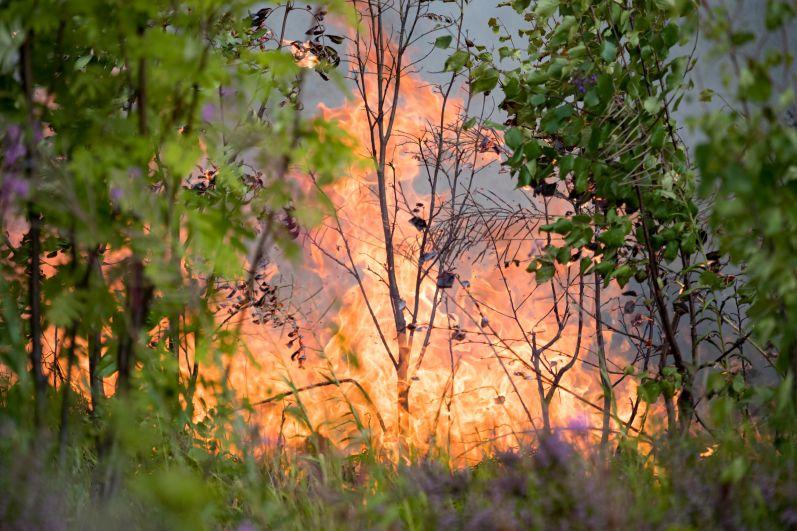 Лесные пожары рядом с Сямозером в Пряжинском районе Карелии