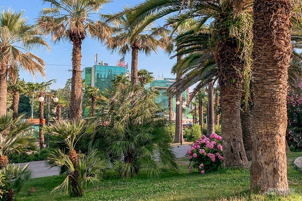 Сочи славится своими чистыми и опрятными зелеными зонами.
