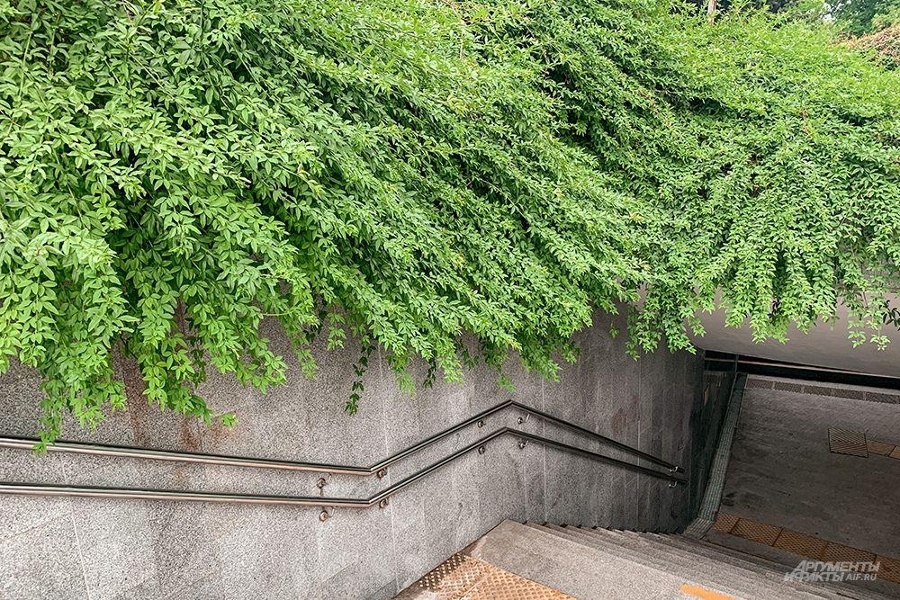 Навесающая над подземным переходом густая зелень также создает южный колорит.