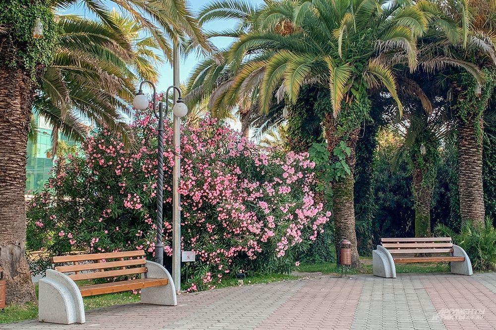 Сад вблизи железнодорожного вокзала Сочи.