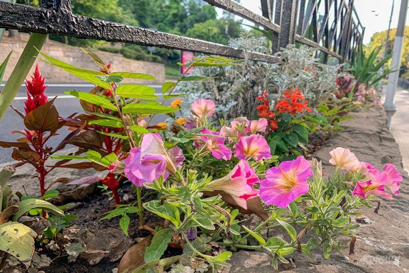 В Сочи украшены цветами даже дорожные бордюры.