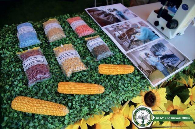 Гости выставки могли познакомиться с новыми сортами сельскохозяйственных культур и лучше узнать старые.