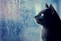 Прогноз погоды в Украине на 22 июля: пройдут дожди.
