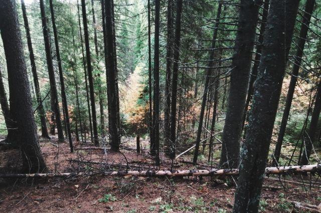 В лесу легко заплутать