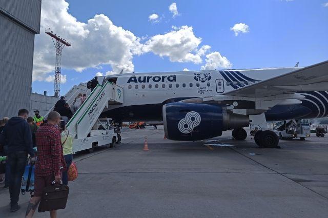 Самолеты с амурскими тигром летают из Красноярска во Владивосток