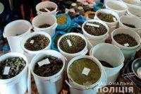 У жителя Николаевской обнаружили плантацию конопли.